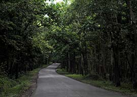 Places to visit in Dandeli